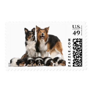 Border collie family postage