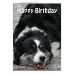 Border collie - feliz cumpleaños tarjeta de felicitación