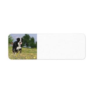 border collie full 3.png label