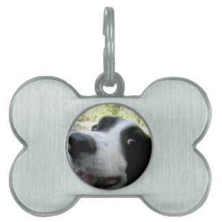 Christmas borders pet tags for dogs cats zazzle border collie gifts pet id tag sciox Choice Image