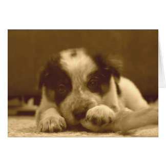 Border Collie Greeting Card~Ava Greeting Card