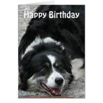 Border Collie - Happy Birthday Card