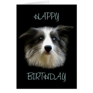 Border Collie Happy Birthday Card