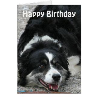 Border Collie - Happy Birthday Greeting Card
