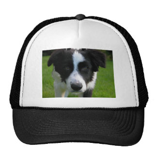 Border Collie Mesh Hat