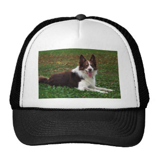 Border Collie Hats