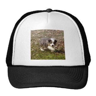Border Collie Hat
