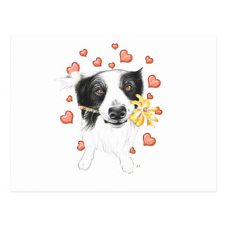 Border Collie Hearts Postcard