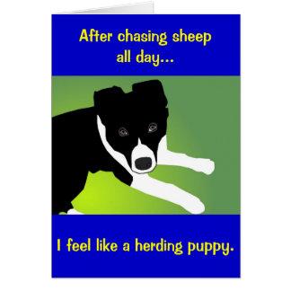 Border Collie Herding Puppy Card