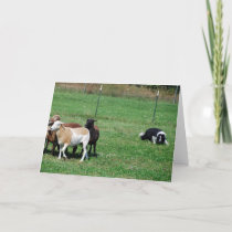 Border Collie Herding Sheep Note Card