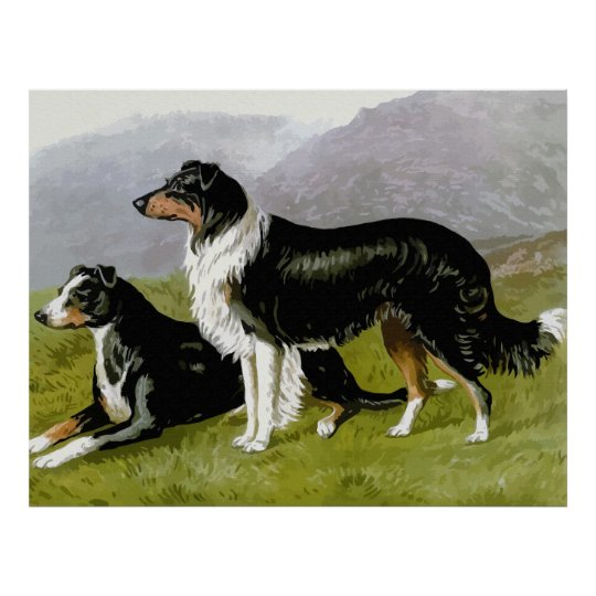 Border collie, High Quality dog drawing Poster