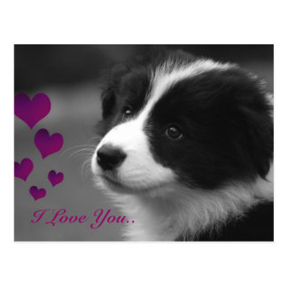 Border Collie, I Love You.. Post Cards