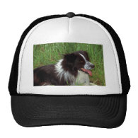 Border Collie in grass Mesh Hats