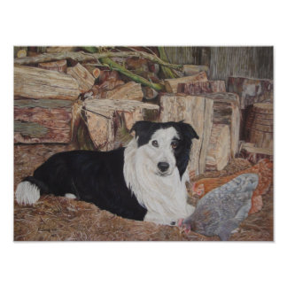 border collie in log shed with chickens portrait poster