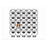 Border Collie in the Sheep Post Cards