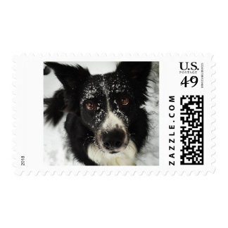 Border Collie in the Snow postage