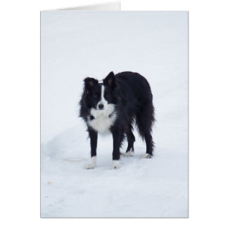 Border Collie in Winter Card