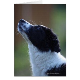 border collie joven del perrito tarjeta de felicitación