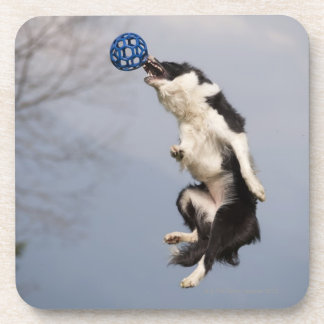Border Collie just before catching the ball high Beverage Coaster