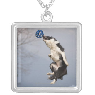 Border Collie just before catching the ball high Silver Plated Necklace
