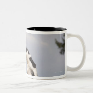 Border Collie just before catching the ball high Two-Tone Coffee Mug