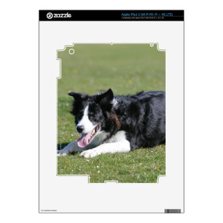 Border Collie Laying Down Decal For iPad 3