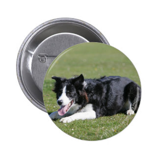 Border Collie Laying Down Pinback Button