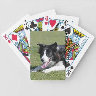 Border Collie Laying Down Playing Cards