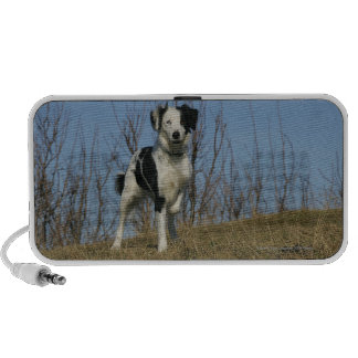 Border Collie Leg Raised Portable Speaker