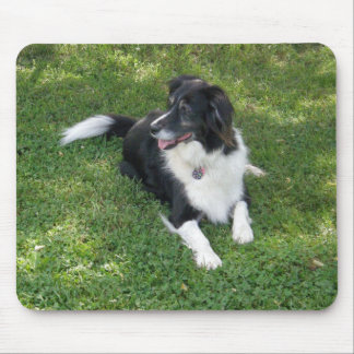 Border Collie Lying Down Mouse Pad