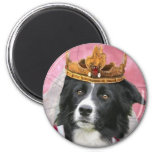 Border Collie Magnet~Queen For A Day