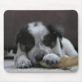 Border Collie Mousepad~Ava Mouse Pad