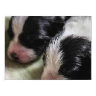 Border Collie Newborn Puppies Card