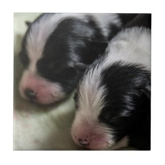 Border Collie Newborn Puppies Ceramic Tile