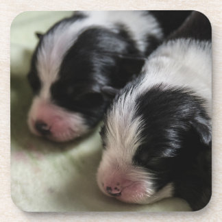 Border Collie Newborn Puppies Drink Coaster