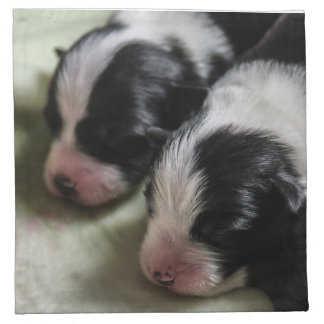 Border Collie Newborn Puppies Napkin