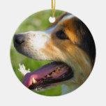 Border collie ornamento para arbol de navidad