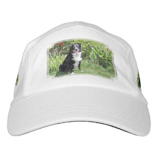 Border Collie - Paddy - Pasten Hat