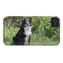 Case-Mate iPhone 4 Barely There Universal Case with Collie Phone Cases design