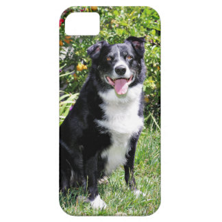 Border Collie - Paddy - Pasten iPhone SE/5/5s Case