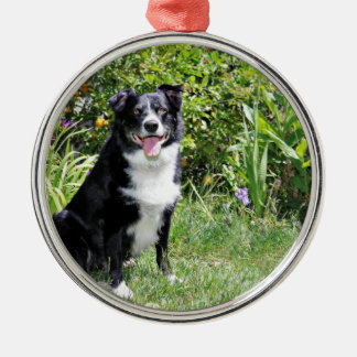 Border Collie - Paddy - Pasten Metal Ornament