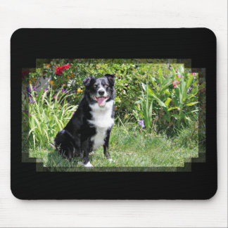 Border Collie - Paddy - Pasten Mouse Pad
