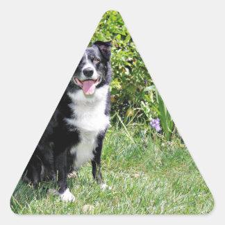 Border Collie - Paddy - Pasten Triangle Sticker
