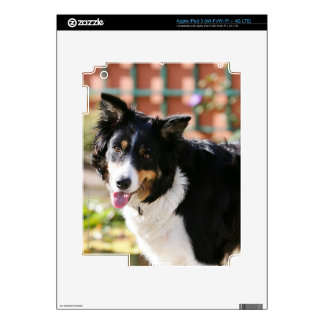 Border Collie Panting 1 Decal For iPad 3