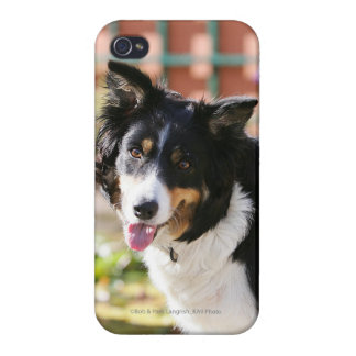 Border Collie Panting 1 iPhone 4/4S Case