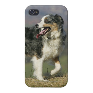 Border Collie Panting 2 Cases For iPhone 4