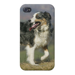 Case Savvy iPhone 4 Matte Finish Case with Collie Phone Cases design