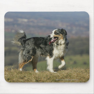 Border Collie Panting 2 Mouse Pad