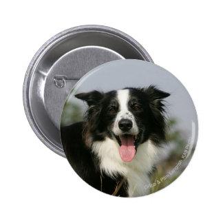 Border Collie Panting Headshot 1 2 Inch Round Button
