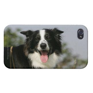 Border Collie Panting Headshot 1 iPhone 4 Cases